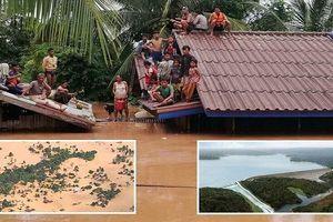 Nhìn lại diễn biến thảm họa vỡ đập thủy điện tại Lào