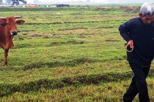 Vụ bắt trâu, bò 'cõng' phí gặm cỏ: Chủ tịch xã bị kiểm điểm rút kinh nghiệm