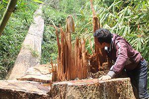 Để mất rừng và khoáng sản, hàng loạt cán bộ bị kỷ luật