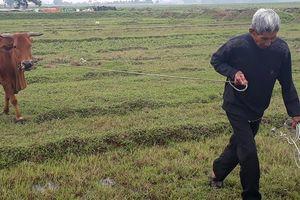 Thanh Hóa trâu bò phải đóng phí cỏ: Hàng loạt cán bộ xã bị phê bình