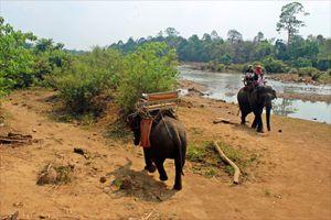 Tiến tới giảm loại hình du lịch cưỡi voi Tây Nguyên
