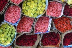 15 nông sản ngon nhất Việt Nam 'tranh hùng'