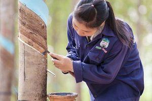 HAG và HNG lấy lại những gì đã mất sau thông tin giải trình thiệt hại vụ vỡ đập ở Lào