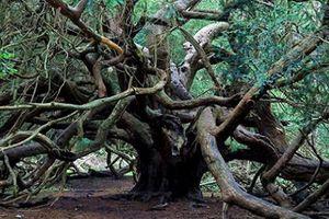 Khu rừng phù thủy và bí ẩn hút người người theo dõi