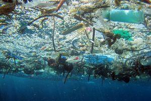 Giao đầu mối quản lý vấn đề rác thải nhựa đại dương