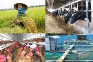 Hỗ trợ phí bảo hiểm nông nghiệp cho lúa, trâu bò và tôm