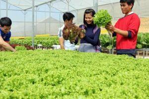 Nông nghiệp 4.0: Không phải cứ làm nông nghiệp CNC là sẽ thành công