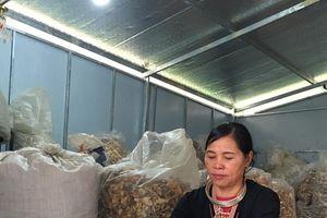 Hiệu quả từ thảo dược núi rừng của người Dao đối với bệnh đau nhức xương khớp