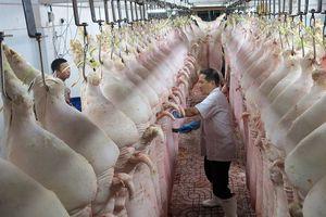 Nhọc nhằn 'săn' giấy phép xuất khẩu thịt lợn