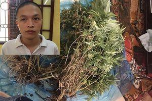 Tinh vi thủ đoạn trồng cần sa trong căn hộ chung cư thuê giữa Hà Nội