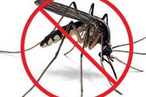 Bạn có biết trồng cây gì đuổi muỗi tốt nhất mà dễ chăm sóc chưa?