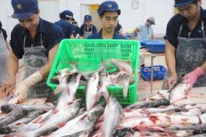Chiến tranh thương mại Trung – Mỹ: Thời cơ của cá tra Việt Nam
