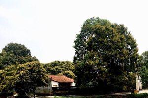 Ngỡ ngàng làng gốm đất Sơn Đông