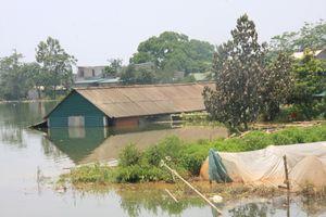 Cuộc sống người dân Chương Mỹ bị đảo lộn vì ngập lụt