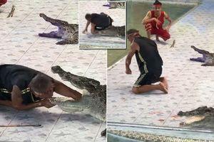 Cá sấu đớp tay người huấn luyện trong lúc diễn xiếc ở Thái Lan