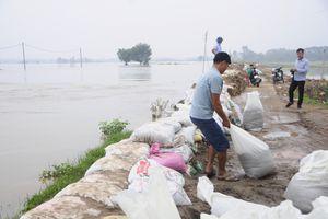 Cận cảnh dân Hà Nội căng sức đắp bao cát hộ đê sông Bùi