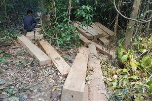 Cận cảnh vụ khai thác trái phép hơn 36,5 khối gỗ giổi tại Bình Định