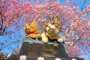 Cặp đôi 'mèo cưng' và hành trình phượt trên mọi nẻo đường