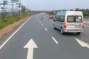 Nam thanh niên suýt mất mạng vì đuổi bò trên cao tốc
