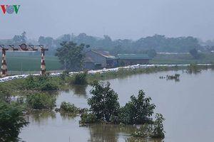 Chương Mỹ công bố thiệt hại ban đầu do ngập lụt