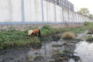 Hải Phòng: Dân khổ sở vì nước thải đen nghịt cạnh Công ty giày Aurora Việt Nam?