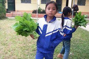 Quà tặng thầy cô là rau, măng, hoa dại