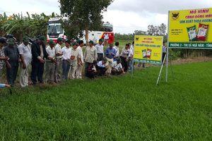 Đoàn Campuchia tham quan mô hình sử dụng phân bón Bình Điền tại ĐBSCL