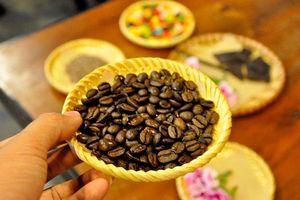 Đánh thức cà phê Arabica Việt Nam