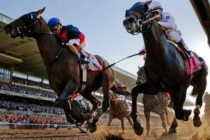Những sự thực ít biết về thú đua ngựa quý phái