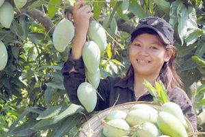 Cần đột phá cải cách thể chế để xuất khẩu nông sản 'hái quả ngọt'