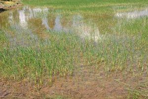 Đồng bằng sông Cửu Long bị xâm nhập mặn ngày càng nghiêm trọng