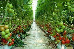 Tương lai nông nghiệp Việt Nam: Chất lượng sản phẩm là 'cứu cánh'