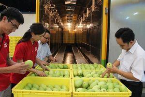 Australia công bố 16 điều kiện cho xoài nhập khẩu từ Việt Nam