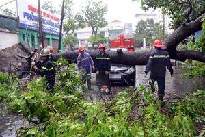 Hà Nội công bố các công ty trồng cây xanh cẩu thả