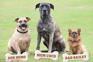 Bức ảnh khó tin về gia đình… chó
