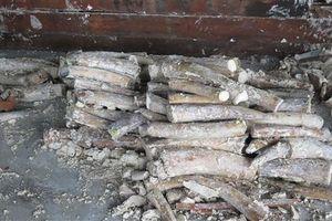Phát hiện gần 1 tấn ngà voi trong lô hàng quá cảnh