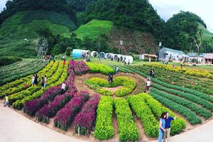 Ngẩn ngơ thung lũng hoa đẹp như mơ ở thiên đường Mộc Châu