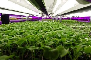 2 ĐH tham gia dự án 4 triệu đô đưa đèn LED vào nông nghiệp