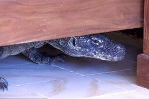 Hoảng hồn phát hiện rồng Komodo trong nhà tắm khách sạn