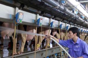 Việt Nam đủ sữa tươi cho Chương trình Sữa học đường