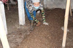 Chủ trang trại thu hàng trăm triệu nhờ trồng nấm