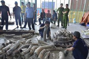 Tạm đình chỉ 4 vụ buôn lậu ngà voi vì hết hạn điều tra