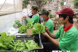 Đồng Tháp sẽ mở rộng diện tích rau màu an toàn lên hơn 1.000ha