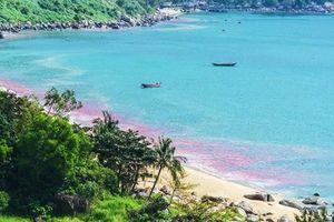 Đã có kết quả xét nghiệm 'vệt nước đỏ' ở vùng biển Vũng Áng
