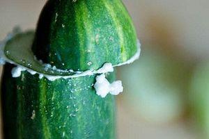 Lý do dưa chuột bị đắng và cách trồng để trái dưa không bị đắng
