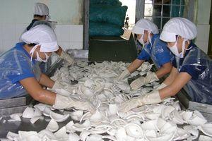 Bến Tre: Vườn dừa xơ xác, doanh nghiệp phải nhập dừa về chế biến