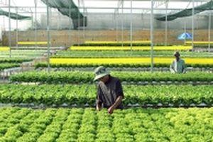 Sản xuất nông nghiệp công nghệ cao ở Lâm Ðồng
