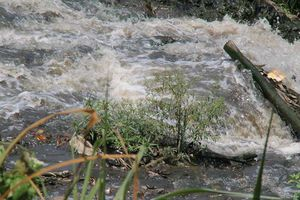 Trại heo ô nhiễm ở Đồng Nai: cấp phép rồi bỏ mặc