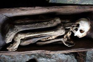 Dựng tóc gáy xác ướp co quắt trong thân cây ở Philippines