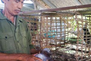 Ăn chắc 3 triệu đồng/tháng từ nuôi 200 cặp bồ câu Pháp